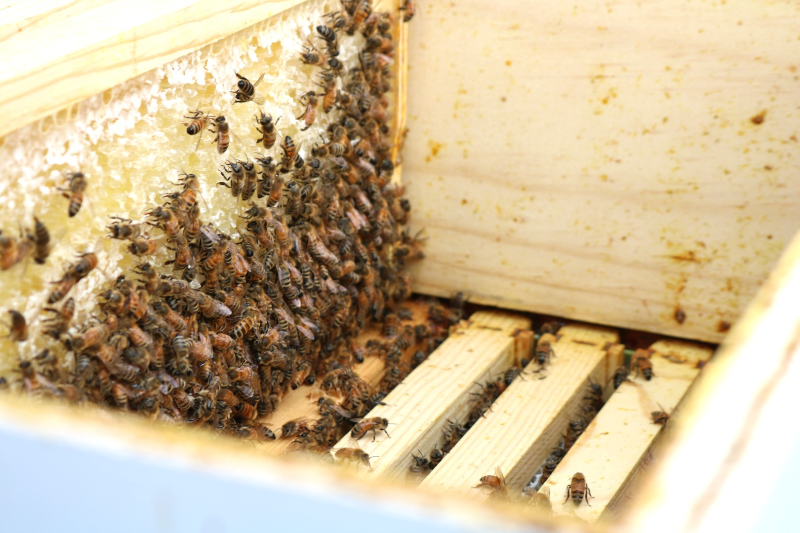 Bee Keeping- Q&A Top Bee Keeping Questions Answered