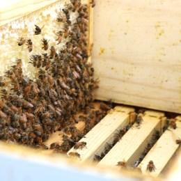 Bee Keeping- Must Read before getting BEES!
