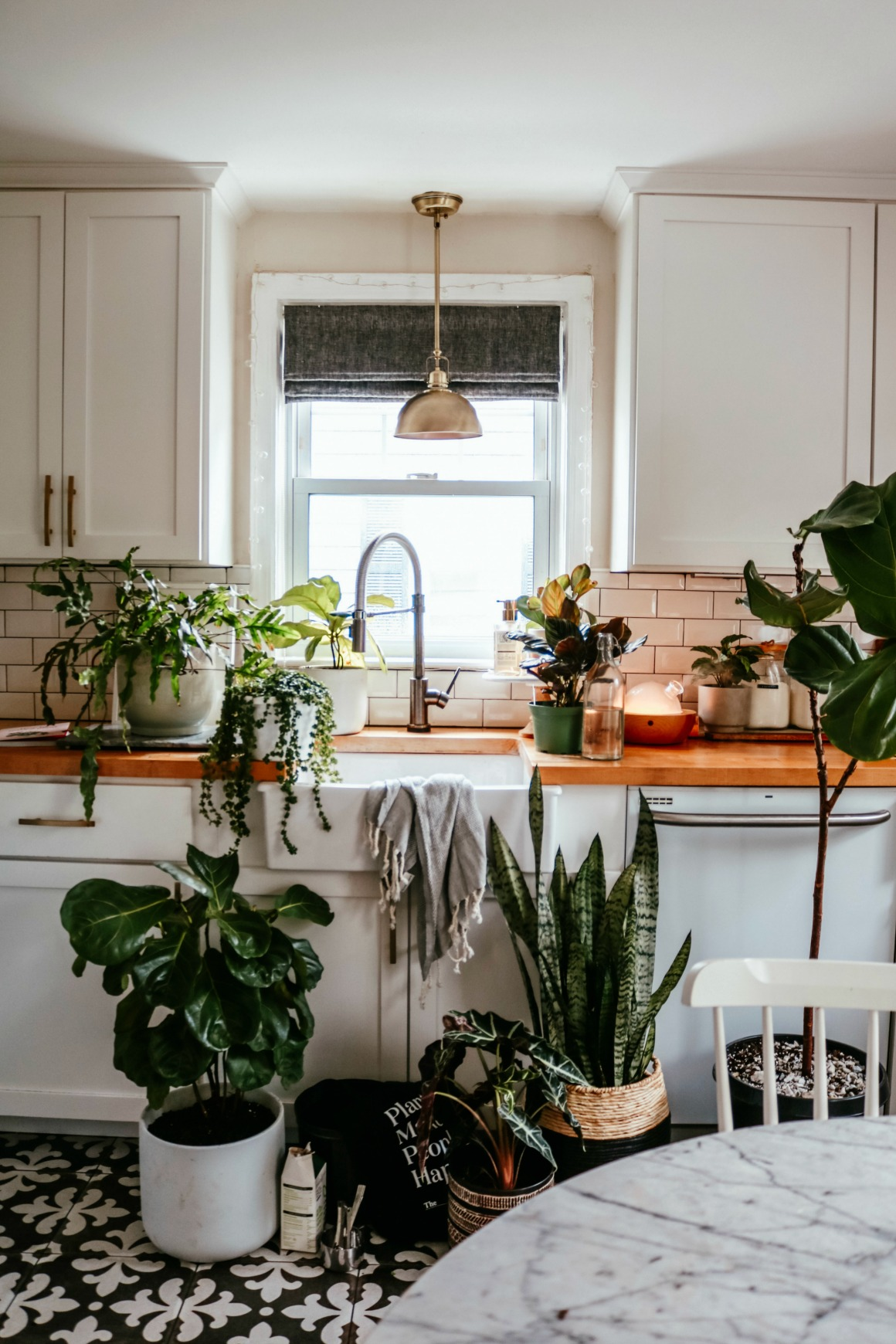 When to Fertilize Houseplants and Repot