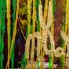 Daydream Panorama (Natures Imagery) 34 (2021) / Signature / Artist: Nestor Toro