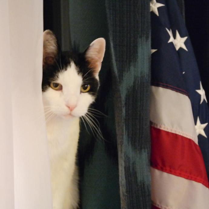 Americat catsofinstagram nofilter samsungnx300 USA howsoonisnow georgie