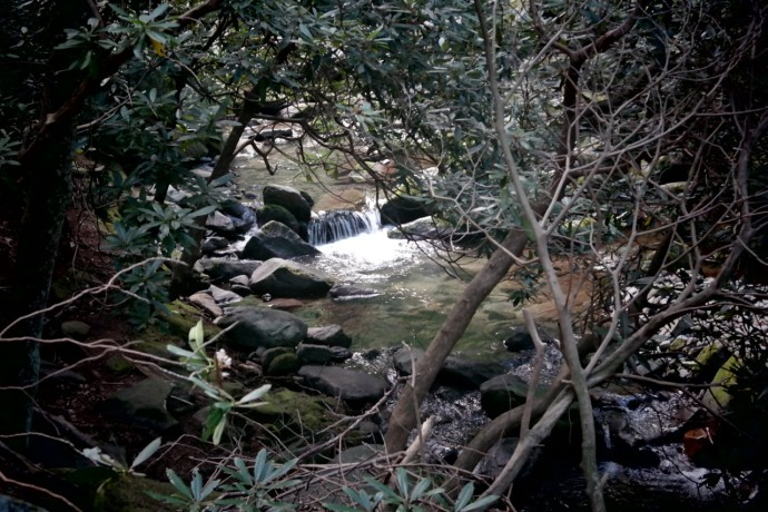 Streams framed by wild rhododendrons