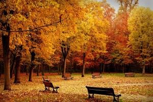 jesen4_1351856510
