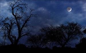 vedra-noc_800