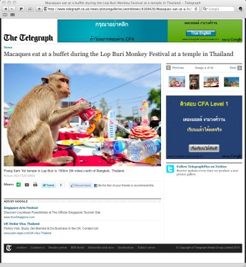 **TEARSHEET FROM THE TELEGRAPH WEBSITE** A monkey drinks a can of soda during the annual 'monkey buffet festival' at the Phra Prang Sam Yod (The Three Crests Phra Prang) in Lopburi province. The festival is held annually on the last Sunday of November to promote tourism.