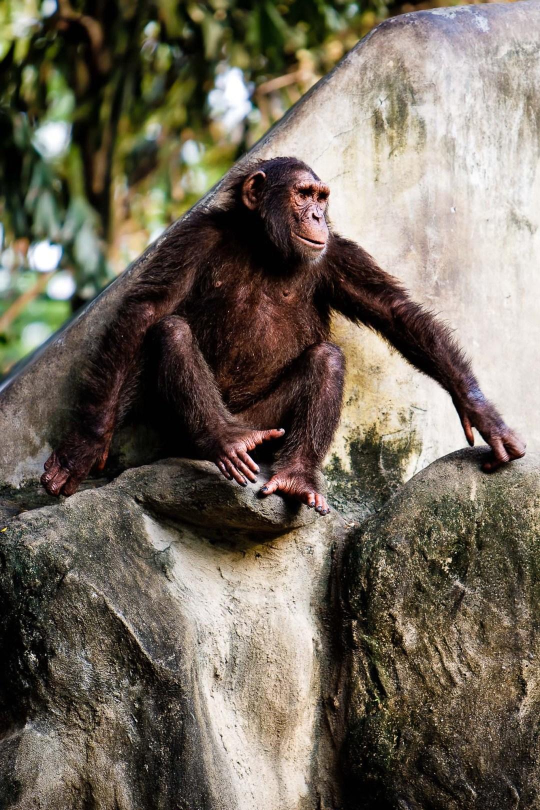 Monkey sitting on a rock | Dusit Zoo Bangkok Thailand