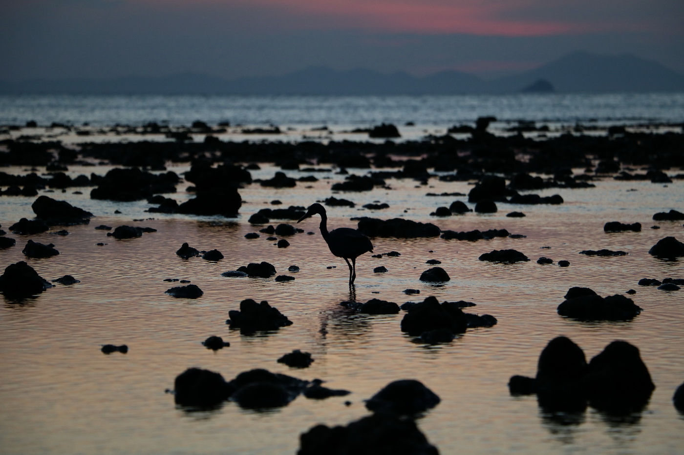 Bird in the water in the low tide