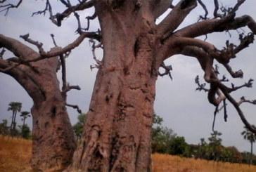 Burkina Faso: Il égorge sa femme après une dispute et se réfugie dans un cimetière