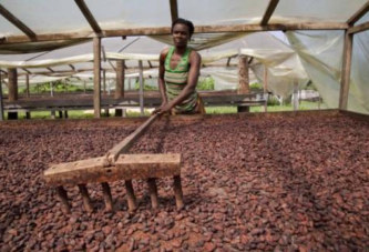 Filière cacao: la production en baisse d'au moins 12%