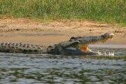 Éthiopie : Un pasteur tué par un crocodile lors d'un baptême
