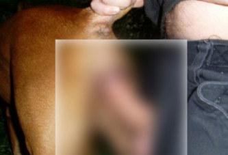 Sénégal: Zoophilie à Saly, un agent de l'Etat arrêté pour avoir violé un chien
