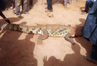 Images: Le crocodile qui a tué un enfant à   Djibo capturé et tué