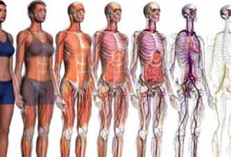 10 choses étonnantes à savoir sur le corps humain