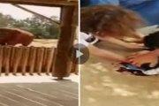 Vidéo - Maroc -  Drame impensable au zoo: une fillette perd la vie