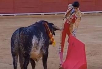 Mort d'un jeune torero après un coup de corne