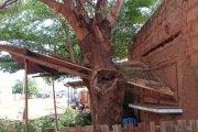 Dégâts causés par des coupures d'arbres d'agents de la SONABEL: « Je suis fatiguée de cette SONAMERDE ! »