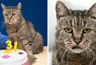 Insolite: Le plus vieux chat au monde fête ses 31 ans