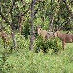Le Parc National de la Comoé : une richesse touristique ivoirienne