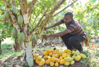 Côte d'Ivoire : les allogènes burkinabé dépités par l'exclusivité de la propriété foncière agricole aux nationaux