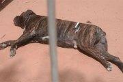 Mort du fils de Barrow: le chien tué