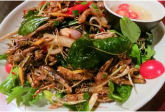 Des insectes au menu de la gastronomie mondiale