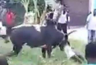 Côte d'Ivoire: Tabaski, un «Binguiste» tué par son propre bœuf