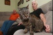 Le chat le plus âgé du monde décède à 32 ans