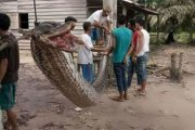 Il gagne son combat mortel contre un serpent de sept mètres