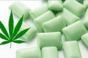 Santé - Un chewing-gum au cannabis pour soulager les douleurs de la fibromyalgie
