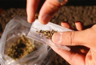 Les fumeurs de cannabis feraient plus souvent l'amour que les autres