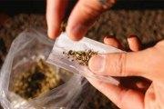 Le Zimbabwe légalise le cannabis