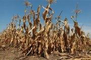 Déficit céréalier: Près de 620 394 personnes seront en insécurité alimentaire en 2018