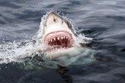 Cuba - Attaque de requin: le bain nocturne tourne au drame  Facebook