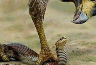 Détournement : la comptable accuse un serpent