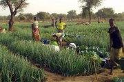 Création de la Banque Agricole du Faso : Du