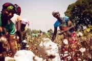 MONSANTO au Burkina Faso : Tromperie et résistance •
