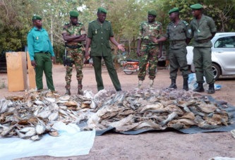 Burkina Faso: 150 kg de viande d'hippopotame saisie à Boutenga