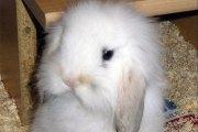 Un homme condamné pour avoir étranglé le lapin de son ex-compagne