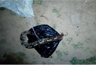 Côte d'Ivoire – Kani: Un paysan tire sur une vipère qui le tue