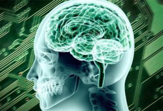 Cinq faits fascinants sur le cerveau humain