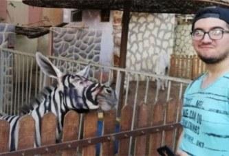 Un zoo égyptien accusé d'avoir 'peint un âne en zèbre'