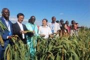 Burkina Faso- Chine:Du mil hybride pour la sécurité alimentaire