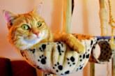Etats-Unis: Ils louent un studio de 37 m2 à 1.300 euros pour leurs deux chats