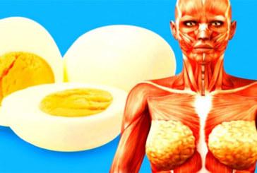 Manger un œuf par jour protège votre cœur, améliore la mémoire, améliore la vue et bien plus encore