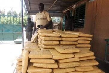 Burkina Faso : Près d'une demie tonne de chanvre indien saisie à Tenkodogo