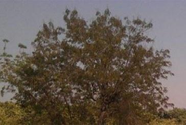 Ouagadougou: Le cimetière de crimes de Tanghin