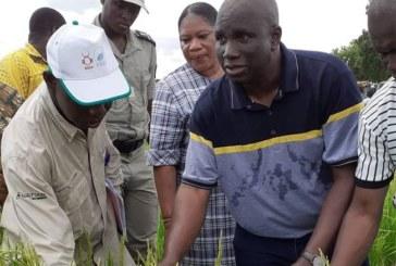Message de monsieur Salifou Ouédraogo, ministre de l'agriculture et des aménagements hydro-agricoles a l'occasion de la 39e journée mondiale de l'alimentation
