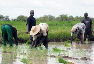 La Côte d'Ivoire confirme son autosuffisance alimentaire