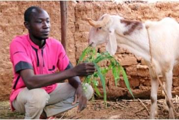Burkina Faso; 400 unités de petit élevage pour promouvoir l'élevage dans le Sahel