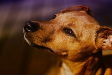 Togo: la viande de chien réservée aux hommes dans le nord du pays. La raison!